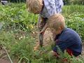 Zwei Kinder bei der Gartenarbeit; Rechte WDR (TV-Bild)